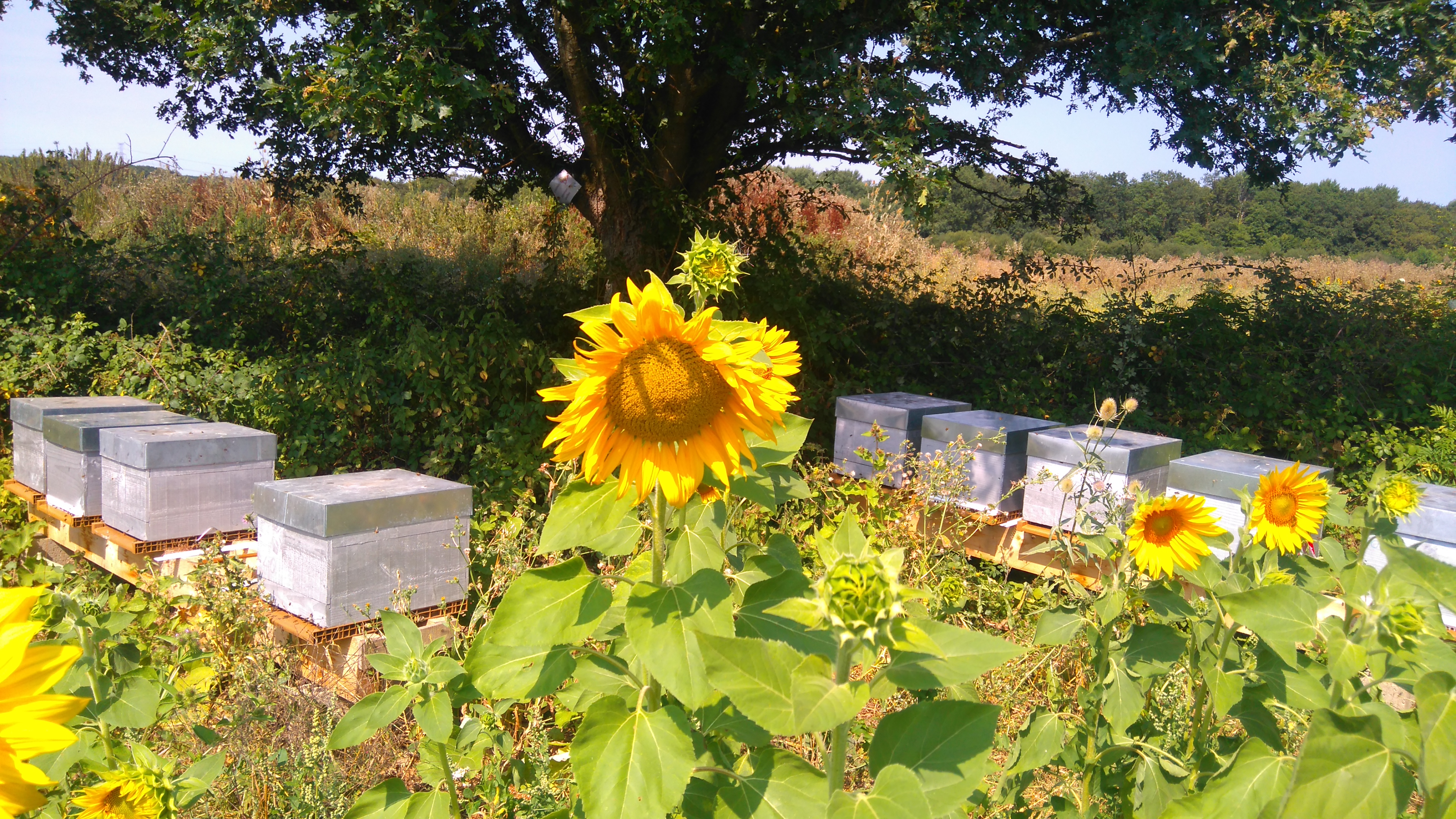 Nos premières installations de ruches